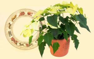 Растения и Зодиак